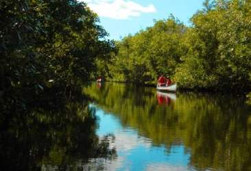 Kayakers at Collier-Seminole State Park near Naples