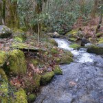 Discover Life in Smokies