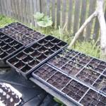 Gardening Baby Steps
