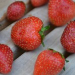 Homegrown Organic Strawberries Worth the Effort