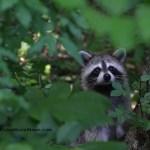 Exploring Summer Wildlife In Your Own Backyard