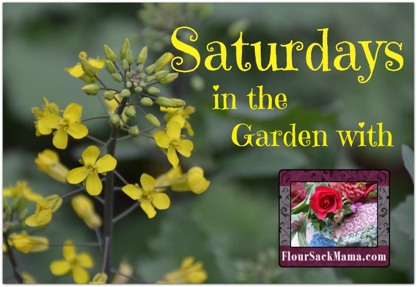 Saturdays in the garden with FlourSackMama.com (tiny yellow kale flowers)