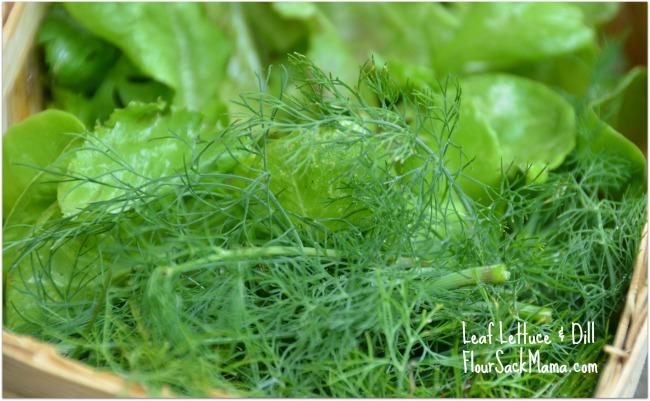 Leaf Letttuce & Dill in July