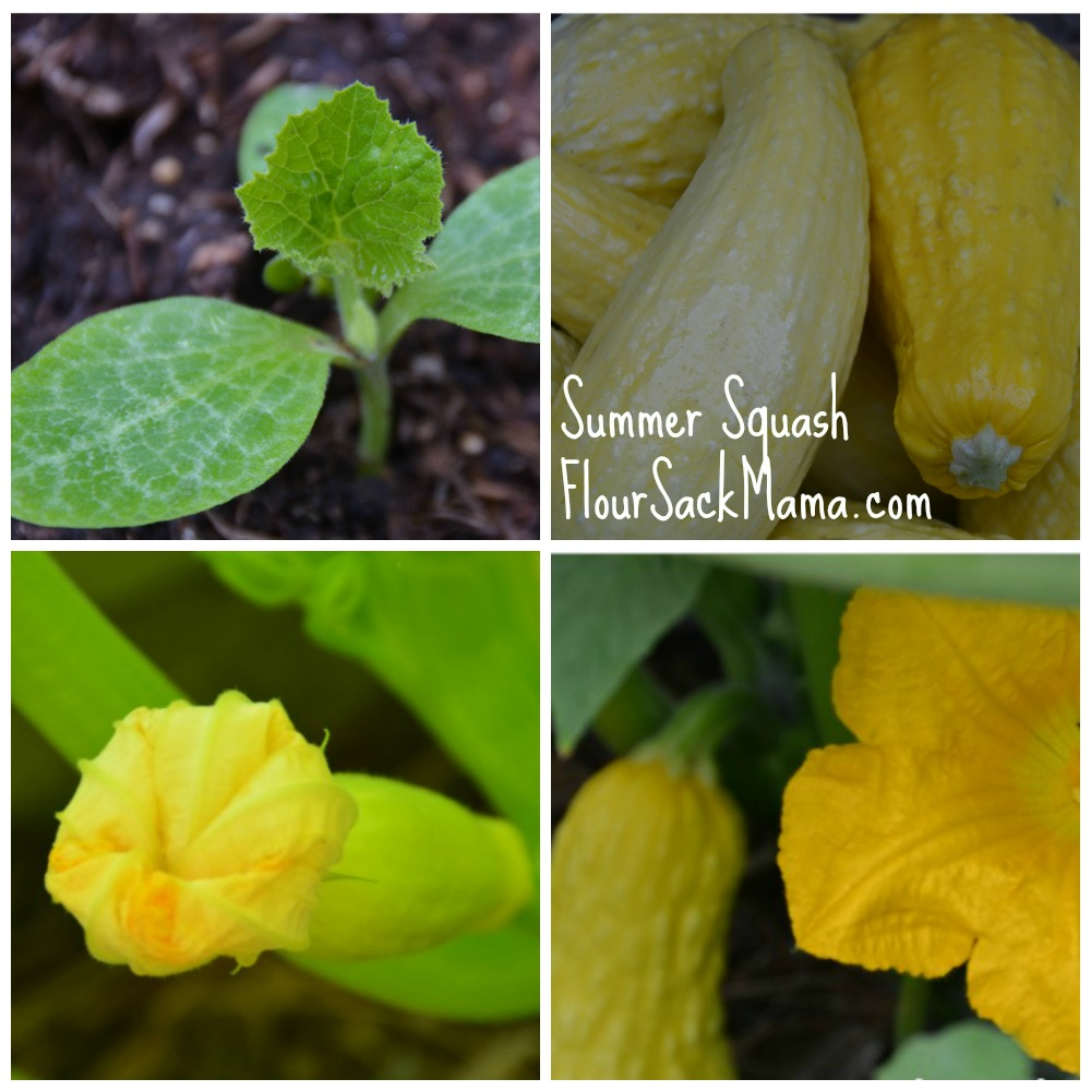Summer Squash Collage Flour Sack Mama