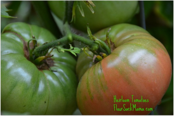 Heirloom Tomatoes Flour Sack Mama