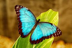 butterfly_m