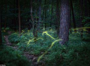firefly trails