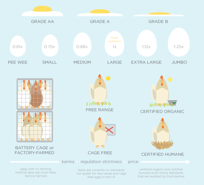 Egg guide partial