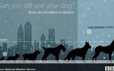 Snow dog accumulation