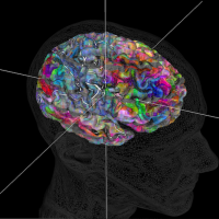 Semantic maps of the brain