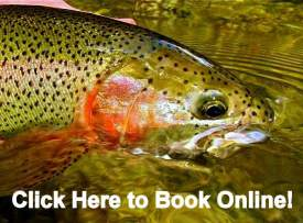 Waynesville Fly Fishing Guides, Great Smoky Mountains Fly Fishing Guides, Fly Fishing the Smokies