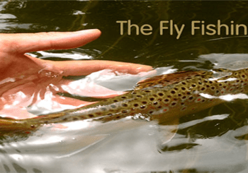 cropped-trout-long-1-1.png
