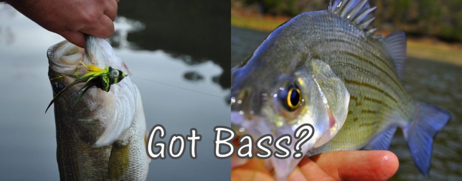 Got Bass 2