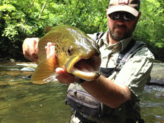 Fly Fishing Bryson City in the Great Smoky Mountains National Park, Fly Fishing Bryson City, Fly Fishing the Smokies, guided fly fishing, Summer Trout Special, Brown Trout,