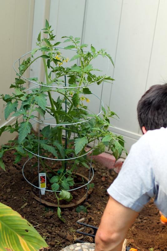 foggydress_tomato_garden