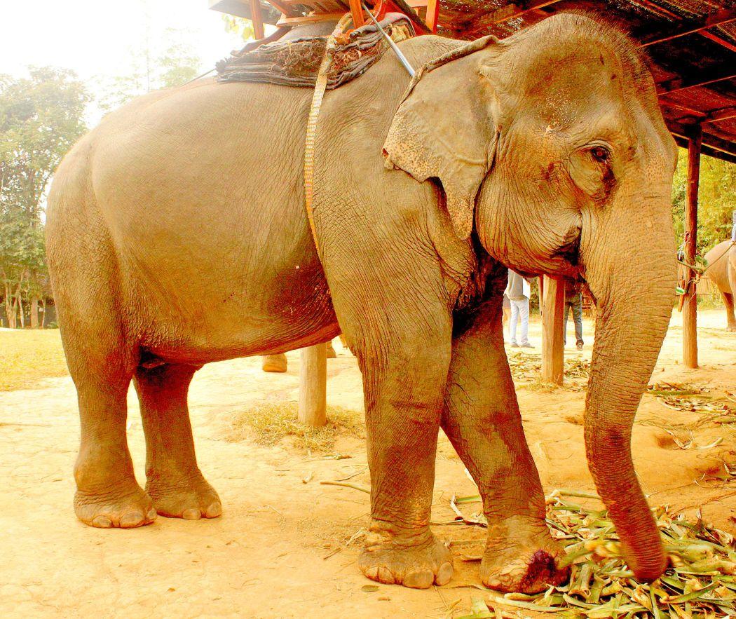 Erlebnis Elefant