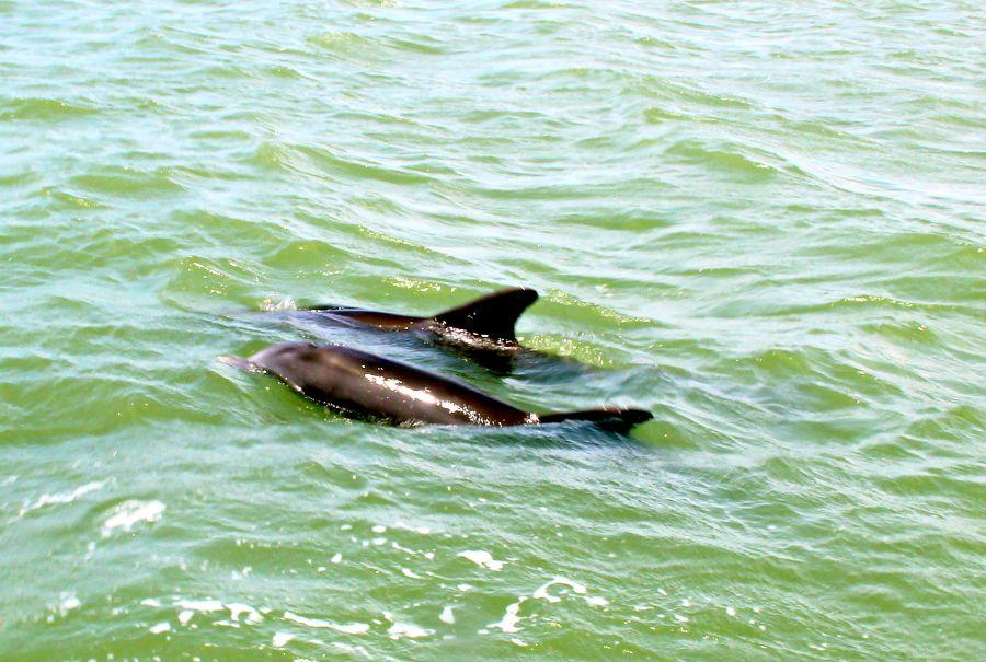 Wo gibt es Delfine? Tipps zum beobachten!