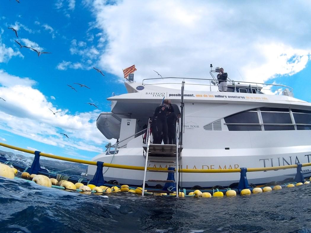 Schwimmen mit Thunfischen, Tuna Tour Balfego