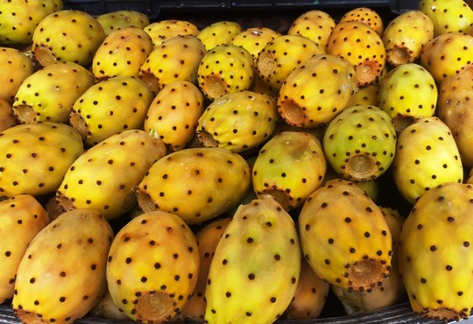 Cactus of prickly pears