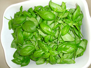 basil-snipped