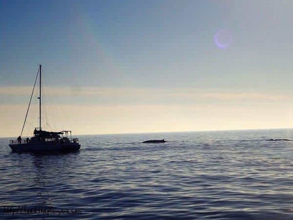 sailboat-thin-whale-fins