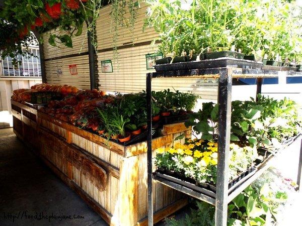 herbs-plants-veggies