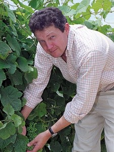 Rupert Symington checking the grapes