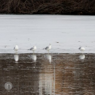 Winter Photo Walk {PSF Give Me Your Best Shot}