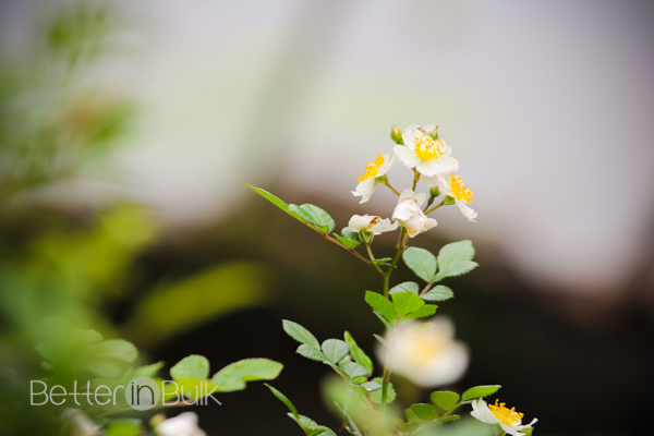 meadowside-6-2