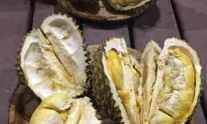 foodicles-davao-food-2-durian-tasting