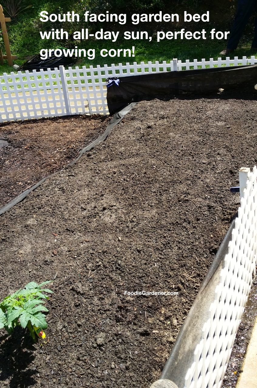 Elegant South Facing All Day Sun Garden Bed For Growing Corn Foodie Gardener