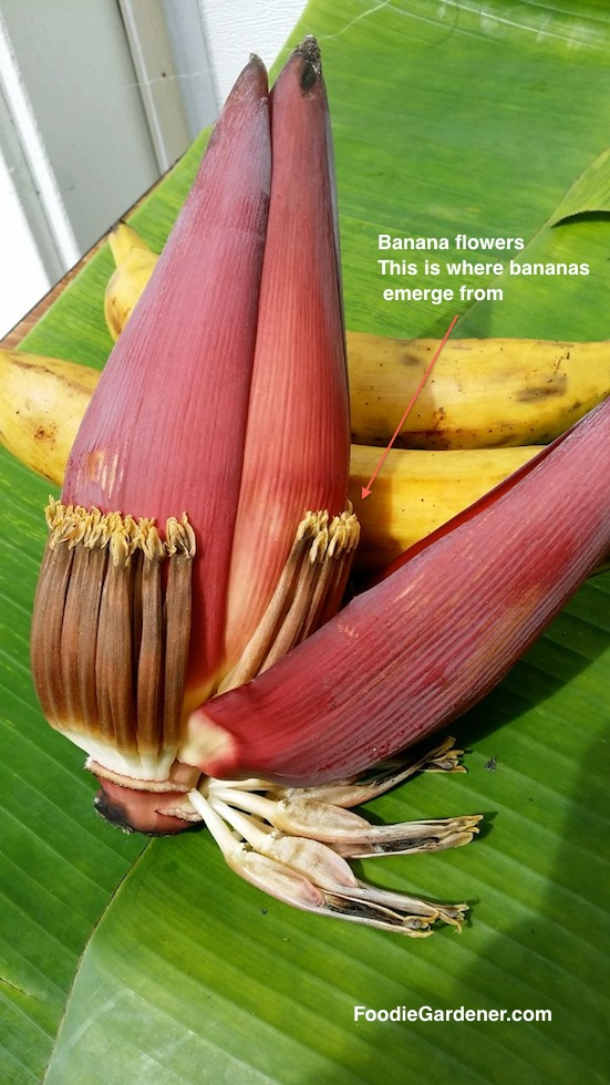 banana flower and plantains on banana leaf shirley bovshow foodie gardener