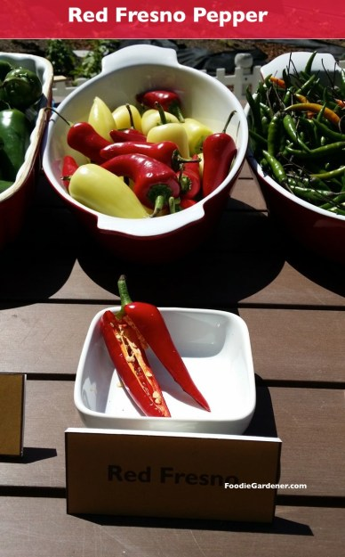Red fresno pepper hot foodiegardener