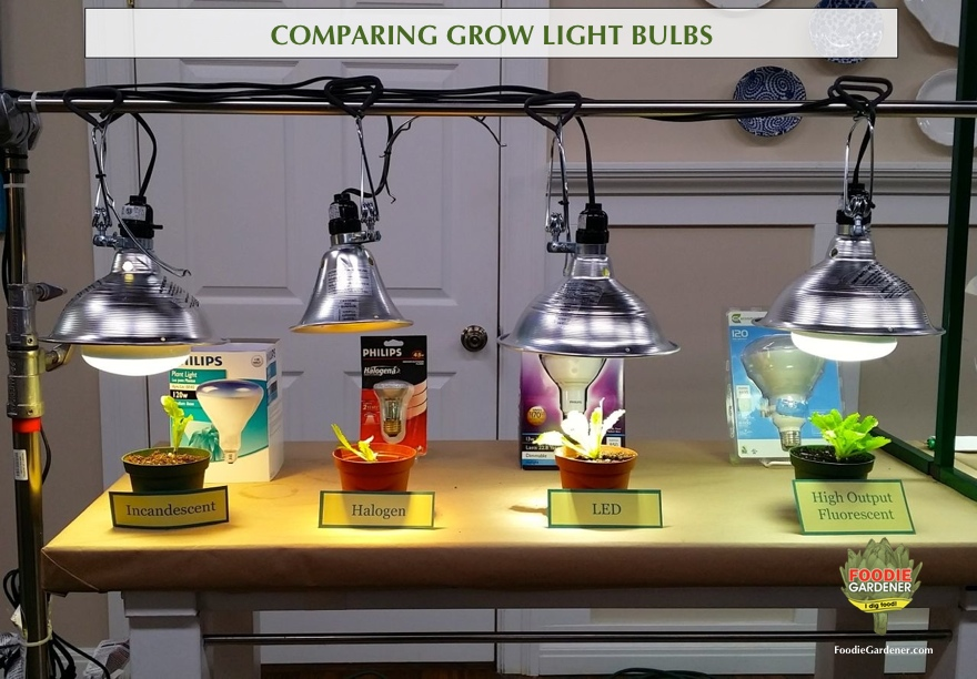 Grow Lights For Beginners: Start Plants Indoors