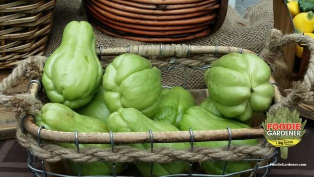 green-chayote-squash-basket-foodie-gardener-blog
