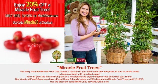 plantogram-miracle-fruit-tree-discount-coupon-shirley-bovshow-home-and-family-show-foodie-gardener-blog