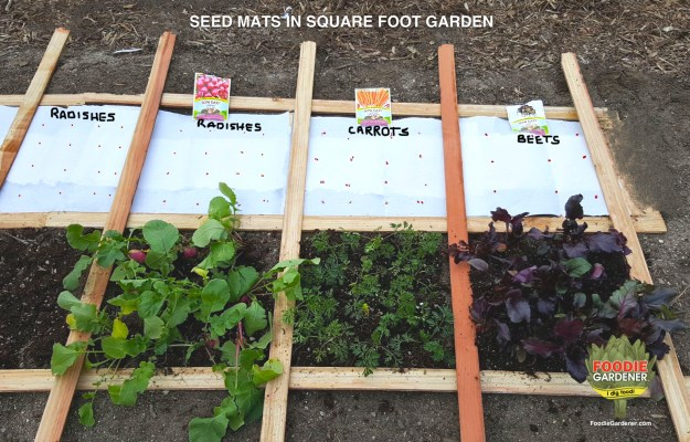 SEED-MATS-RADISH-CARROTS-BEETS-PLACED-IN-SQUARE-FOOT-GARDEN-FOODIE-GARDENER-BLOG