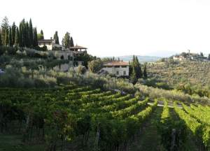 The beautiful setting around a winery in Chianti, Italy