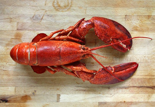 A beautifully cooked 2-lb lobster.