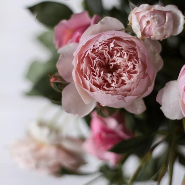 Week 3-52 roses-1