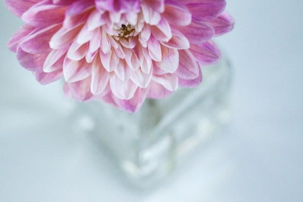 week 7-52 dahlia vase-1
