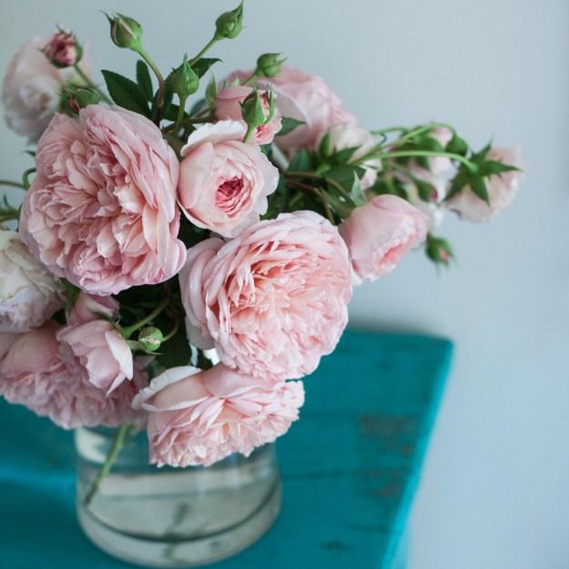 week 10 - pink roses 5-1