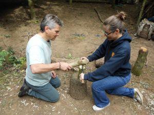 Demonstrate use of bill hook in forest school
