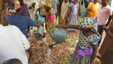 Permalink to: Smallholder farmers in Cameroon benefit from landscape restoration efforts