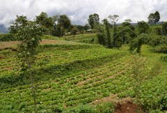 Making farms sustainable and climate-smart with agroforestry: two stories from Smart Tree-Invest