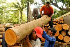Brexit rattles Indonesia's timber trade prospects with Europe