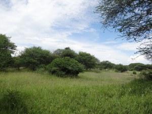 A restored Ngitili system in the Shinyanga Region, Tanzania. Photo credit: Lalisa A. Duguma/World Agroforestry Centre