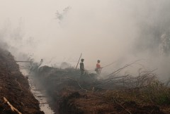 Indonesia can stamp out forest and land fires–with serious action