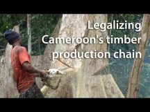 Legalizing Cameroon's timber production chain