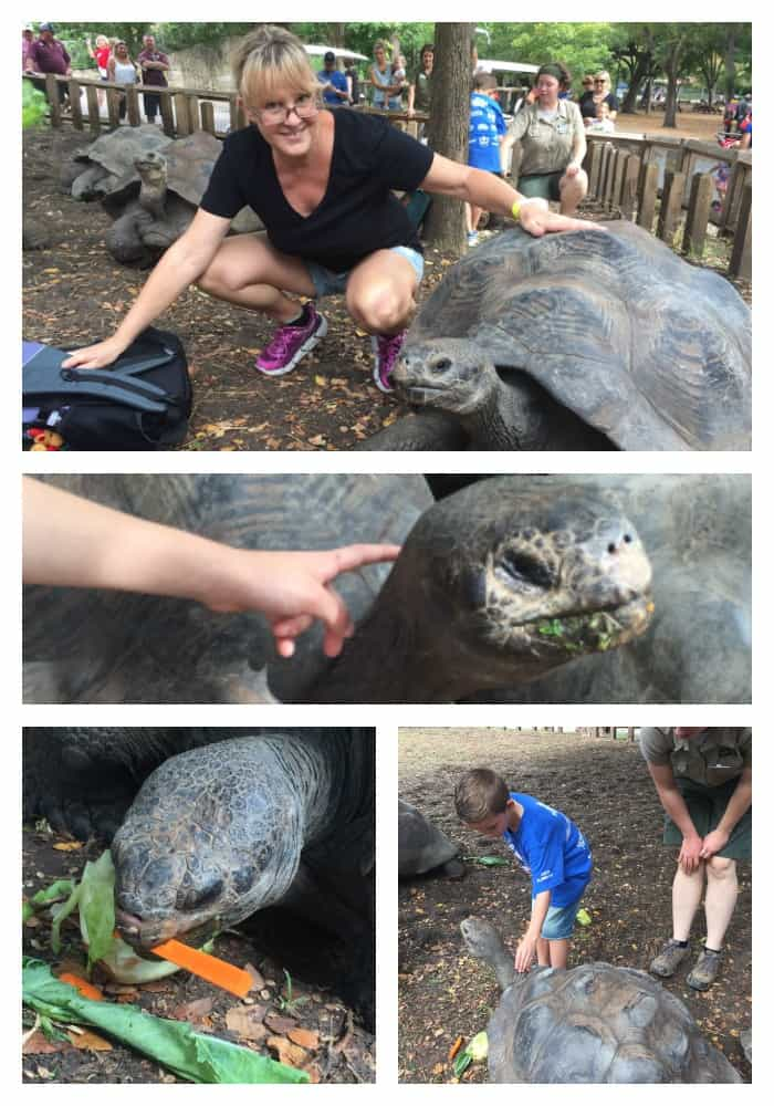 We Fed GALAPAGOS TORTOISE at Dallas Zoo